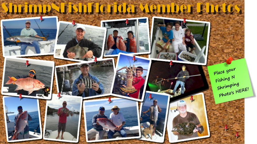 Florida Fishing Reports Forum At It's Best Whether your into Freshwater fishing or Saltwater fishing, we got you covered.