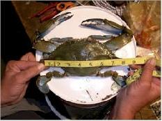 Crabbing Reports
